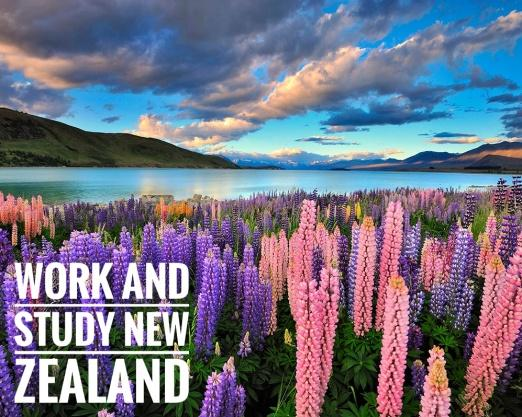 Work and Study New Zealand